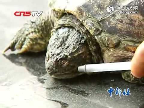 turtle-smoked